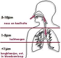 De mate waarin fijnstof binnendringt in het lichaam, is afhankelijk van de grootte van de stofdeeltjes